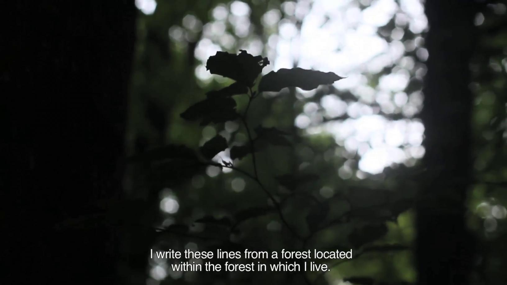 Cartas desde el bosque (2017) - Bárbara Sánchez Barroso