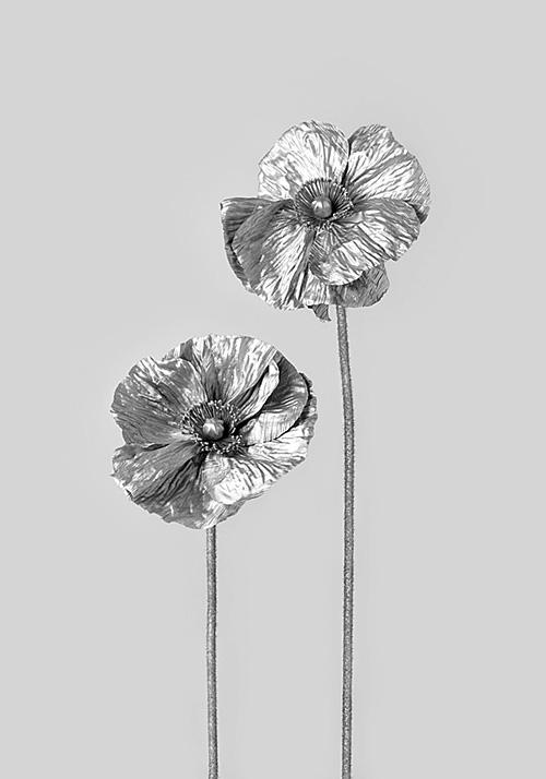 Flores de plata #2 (2013) - Marta Sánchez Marco