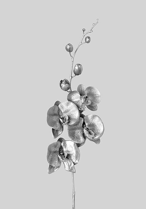 Flores de plata #3