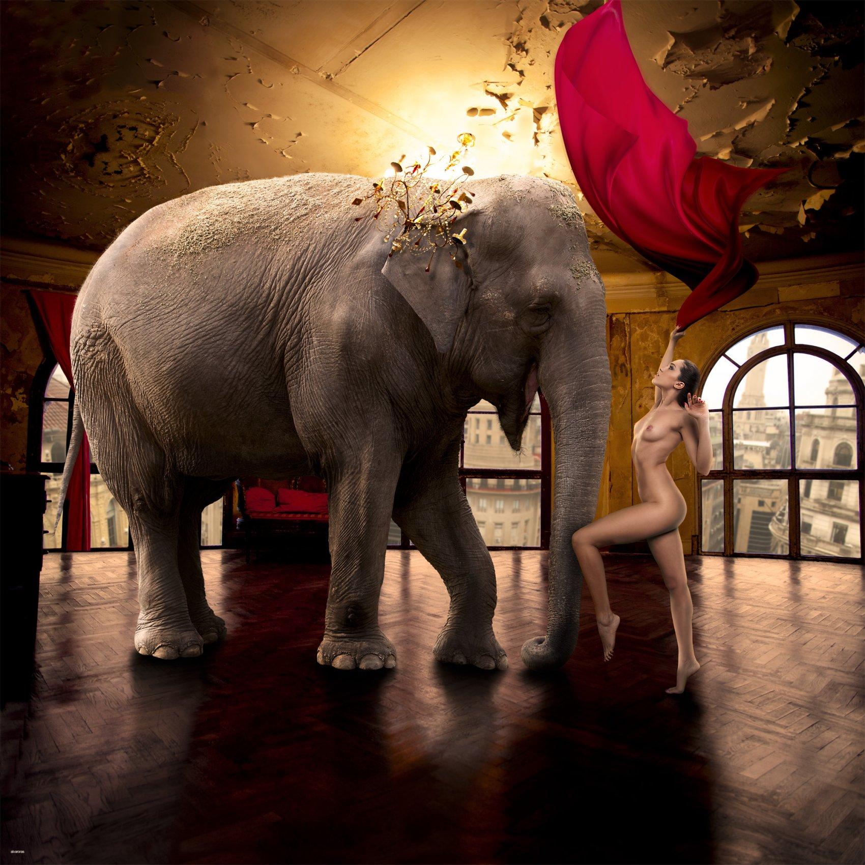Elefante Vailarín (2015) - Alvaro Ras